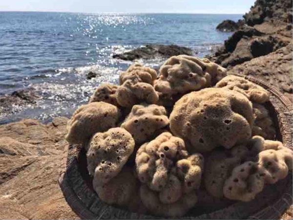 Eponges naturelles de mer | BAR A SAVON